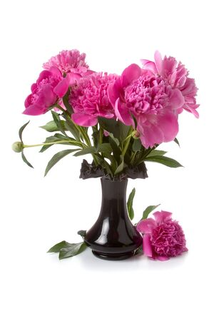 Pink peonies in a vase of black isolated  on a white background photo