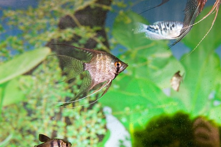 Tropical freshwater aquarium with colorful fish and green plants  Stock Photo - 12362763