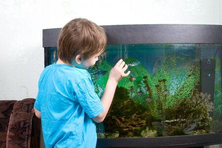 Jongen kijkt naar aquarian kleine vissen thuis Stockfoto