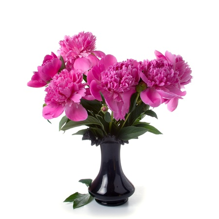 Pink peonies in a black vase  isolated  on a white background photo