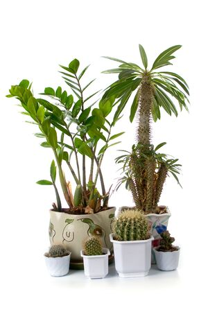 Some houseplants isolated on white background photo