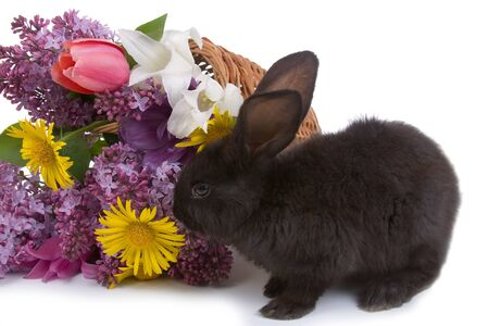 Rabbit and  bouquet of flowers isolated  on a white background photo