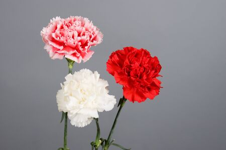 Bouquet of carnations on a gradient background Stock Photo - 13044682