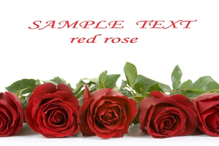 Border of red roses isolated on white background