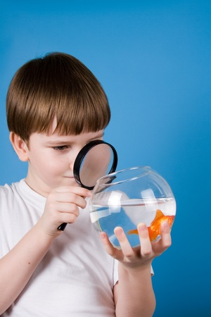 Boy looking through a magnifying glass on a goldfish on a blue background photo