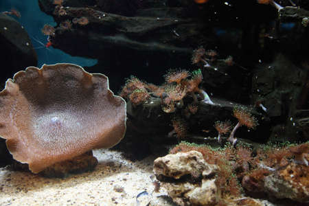 bannerfish: Marine aquarium with corals and shells