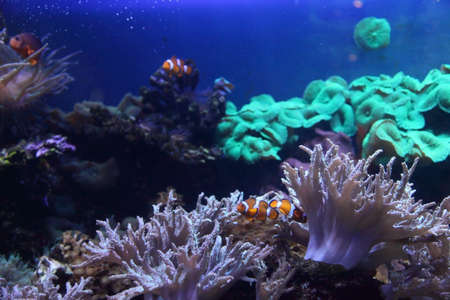 Coral reef and colorful fish Stock Photo - 14617512