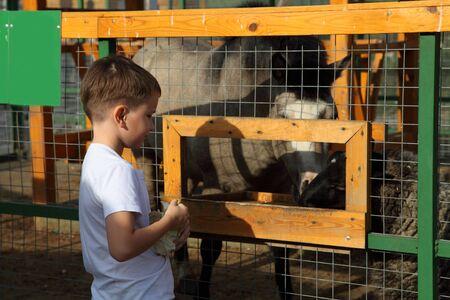 Boy feeds animals at the zoo Stock Photo