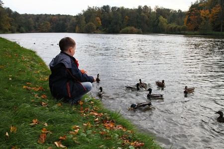Boy feeding the ducks in the pond. Autumn. photo