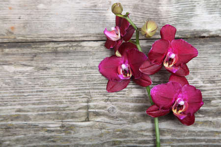 Pink orchid(Phalaenopsis) on a wooden background close-up photo