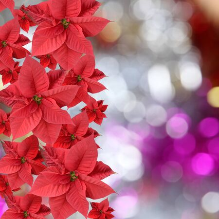 Red poinsettia on abstract bright background
