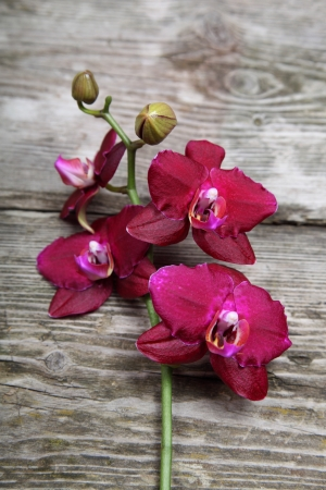Pink orchid(Phalaenopsis) on a wooden background close-up