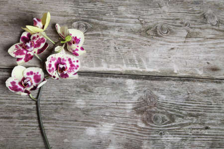 spotty: Pink orchid (Phalaenopsis) on a wooden background close-up Stock Photo