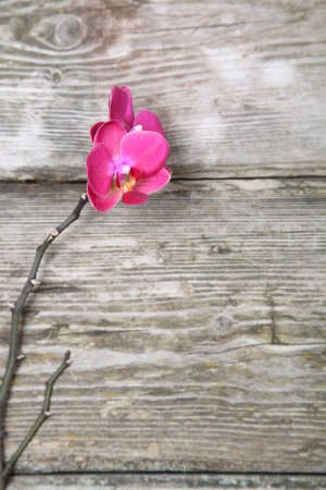 Pink orchid(Phalaenopsis) on a wooden background close-up Stock Photo - 16920586