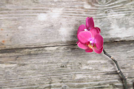 Pink orchid(Phalaenopsis) on a wooden background close-up Stock Photo - 16920593
