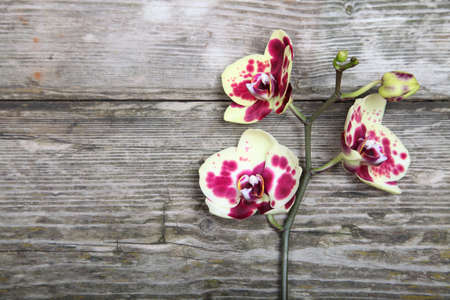 Orchid(Phalaenopsis) on a wooden background close-up Stock Photo - 16920601