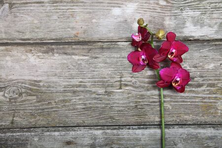 Pink orchid(Phalaenopsis) on a wooden background close-up Stock Photo - 16920677