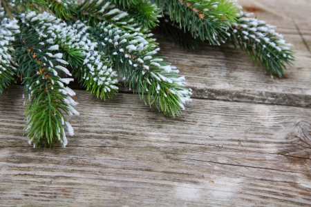Christmas fir tree on the wooden board  Stock Photo - 16920635