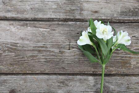 alstroemeria: White alstroemeria on a wooden background