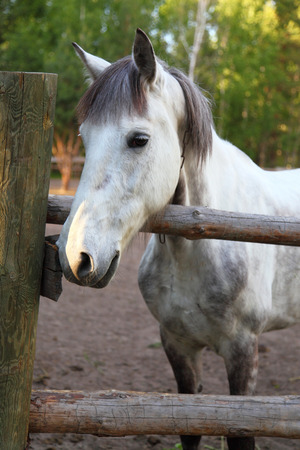 contemporaneous: Cavallo in un paddock in una limpida giornata estiva