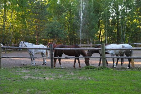 contemporaneous: Horses in a paddock on a clear summer day Stock Photo