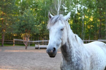 synchronously: Horse in a paddock on a clear summer day Stock Photo