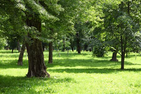 non urban: Trees in the park on a sunny summer day Stock Photo