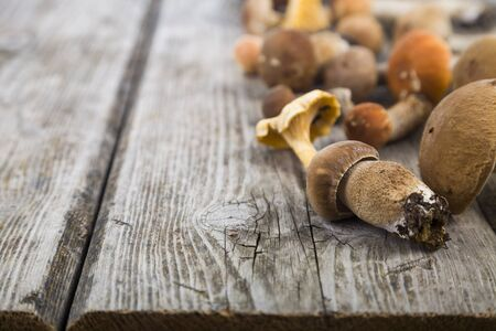 truffe blanche: Raw mushrooms on a wooden table. Boletus edulis and chanterelles.
