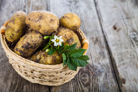 Raw potatoes with leaves and flowers in a basket  on a wooden table Stock Photo