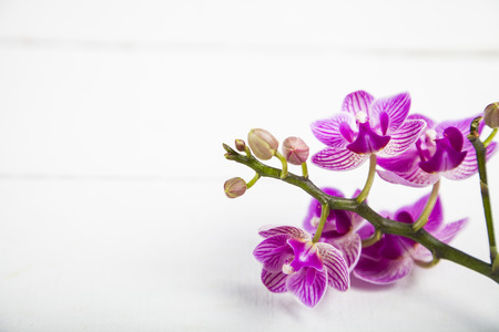 Orchid (Phalaenopsis) on a white wooden table, top view. Beautiful background for your design.