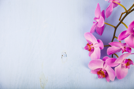 Orchid (Phalaenopsis) on a blue wooden table, top view. Beautiful background for your design.