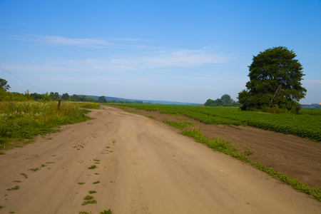 Road near the potato field on a sunny summer day. Agriculture, cultivation of vegetables. Stock Photo