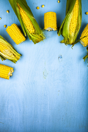 Ripe corn on a blue table close-up. Place for your text. 스톡 콘텐츠