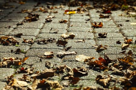 Path in the park with fallen autumn leaves Reklamní fotografie