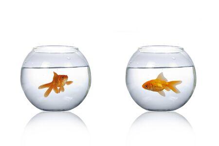 Deux aquarium rond avec poisson rouge isolé sur fond blanc.