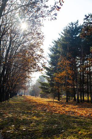 Beautiful autumn park. Beautiful fall landscape.Fallen leaves on the ground. 스톡 콘텐츠