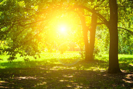Trees in sunlight. Beautiful summer landscape. Park on a sunny day.