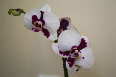 bloomy: orchid withe flower