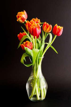 dual color tulips in vase
