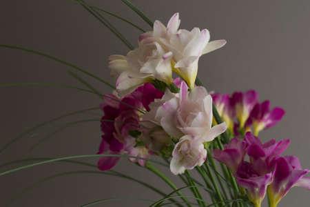 freesia flowers Stock Photo