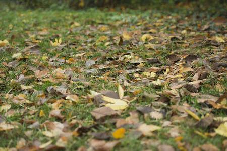 beautiful autumn carpet