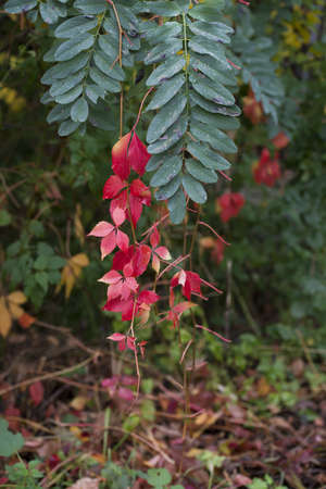 green and red leafs