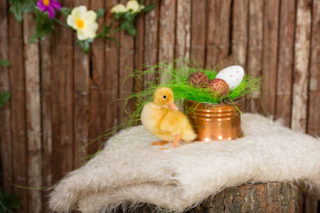 Easter eggs in copper bowl and baby duck Stock Photo