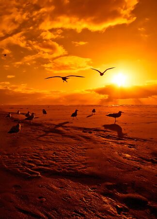 Beach and seagulls in sunset colors