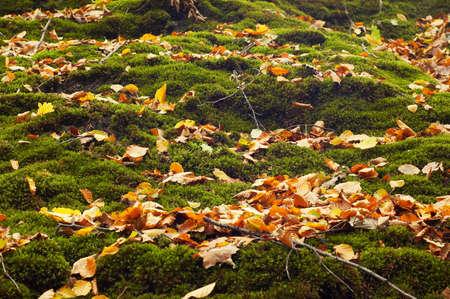 forest floor in autumn background