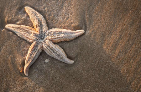 starfish on the beach photo