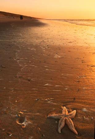 starfish and sunset on the beach photo