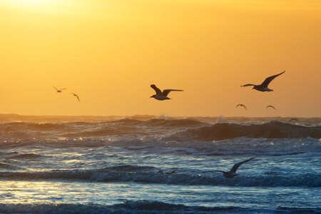 Vögel und Sonnenuntergang am Strand