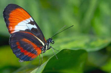 Nahaufnahme eines schönen Schmetterlinges Standard-Bild