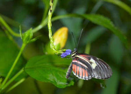 close-up of a beautiful butterfly Stock Photo - 749004